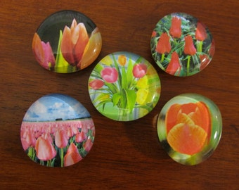 SPRING Has SPRUNG TULIP Magnets