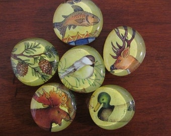 FOREST FRIENDS WILDLIFE of the Pacific Northwest Set of 6 Super Duper Strong Magnets
