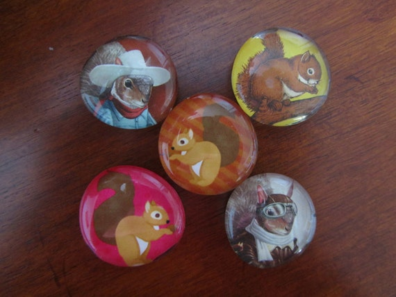 Silly Squirrel Magnets