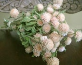 Dried  pale pink  Globe Amaranth Flower Bunch  Wedding Flowers Shower Flowers Wreath making floral suppies  All Natural  country prim shabby