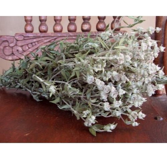 Fragrant Natural Dried Gray Thin Leaf Green Mountain Mint Flowers Country Prim Decorating