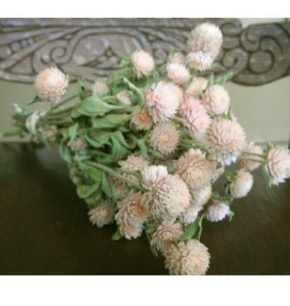 All Natural Dried  light PINK Globe Amaranth Flowers Prim, Shabby, Cottage, Wedding, Floral, wreath making