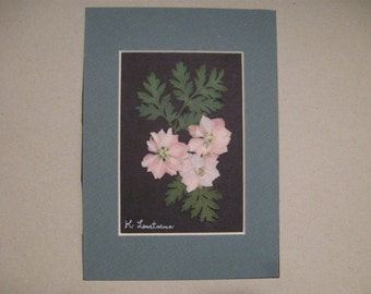 Pressed Flower Picture No. 137