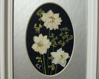 Pressed Flower Picture  (White Larkspur)  No. 159