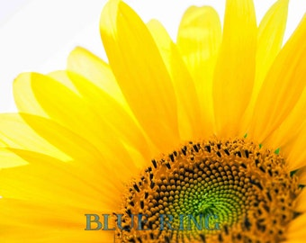 Summertime -8x12 Sunflower Print
