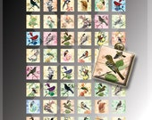 Digital Vintage Birds Collage Sheet-48 Beautiful images-1 inch square -Download and Print