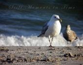 Seagull Couple on the Beach 8x10 Print