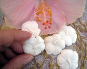 Hibiscus Carved Bone Tropical Flower Cabochon