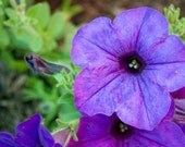 shades  - 4x6 matted flower photograph