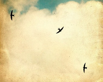 It takes more than one swallow... - FineArtPrint