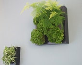 Green Wall DIY kit TWO