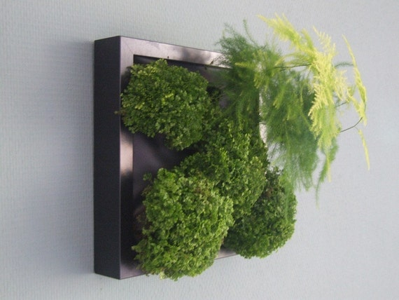 Green Wall Medium DIY