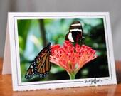 Butterflies, Set of 4 Blank Photo Cards