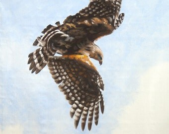 Red Shouldered Hawk wildlife oil painting 24x20 by RUSTY RUST / H-59