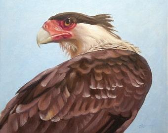Caracara wildlife painting 20x24 oils on canvas by RUSTY RUST / C-77