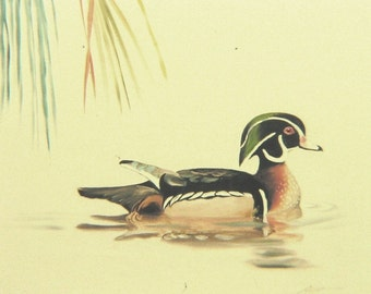 Wood Duck wildlife painting 20x24 oils on canvas by RUSTY RUST / D-39