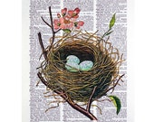 Robin's Egg Bird Nest Print on a Vintage Dictionary Page