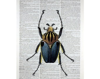 Blue and Gold Beetle Print on a Vintage Book Page
