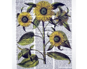 Sunflower Botanical Print on a Vintage Dictionary Page