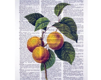 Peaches Print on a Vintage Dictionary Page