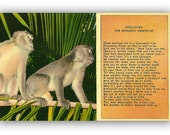 Vintage Linen Postcard Evolution Monkey's Viewpoint