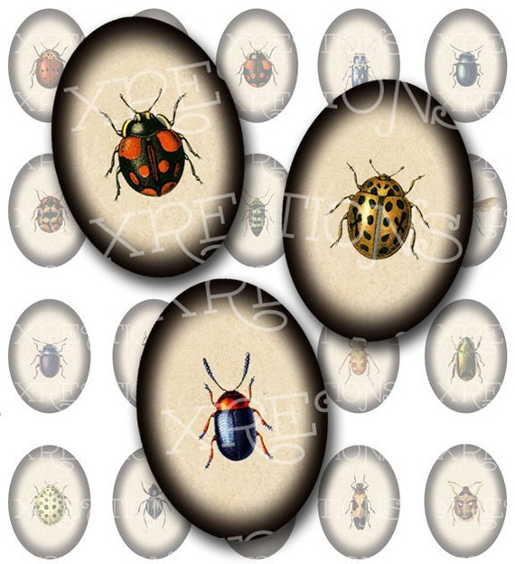 Captured - A Selection of Bugs, Bees and other Insects in 25x18mm ovals - Digital Collage Sheet