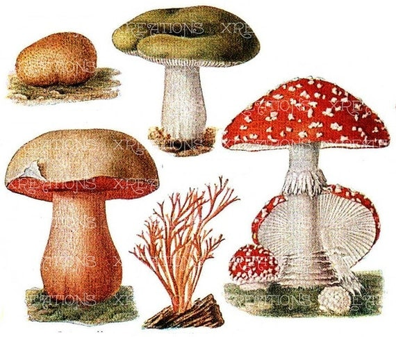 Antique Poisonous Mushroom / Fungi plates - Digital Collage Sheet - Set 2