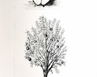 Apple/ Tree Original Intaglio Print