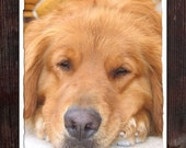 CLEARANCE - Blank Note Card - Single Card - Lazy Summer Afternoon - Golden Retriever