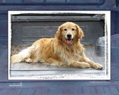CLEARANCE - Blank Note Card - Single Card - Ready for a Ride - Golden Retriever