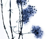 Unbound - 8 x 10 Nature Photography - Winter Flower - Blue and White Dream- Barbed Wire - Limited Edition Print