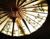 Under the Butterfly Moon - 8 x10 Vintage Bamboo Japanese Umbrella - Limited Edition Print