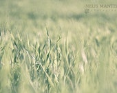 Velvet grass - 8x12 - other sizes available - Fine Art Photography Print