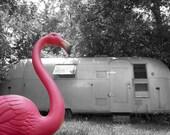 Pink Flamingo 8X12