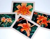 Set of Four Notecards Day Lilies