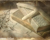 still life - neutrals - taupe, white - books - starfish - linen - cottage - fine art photography - Sunday Mornings 13x19 Color Photograph -