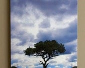 African Tree w/Clouds