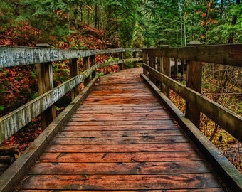 Wooden walkway over a stream and through the woods original color print mounted