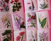 Pretty Vintage Floral Botanical Edible Image wafer papers for your cookies, fondant, chocolates