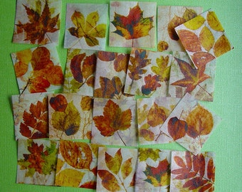 20 Square Fall Autumn Leaves Edible Image Wafer Paper for your Iced Cookies, Cupcakes, Chocolates, or Fondant