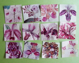 Vintage Orchid Botanical Print edible image wafer papers for your iced cookies, fondant, cupcakes, chocolate and cake
