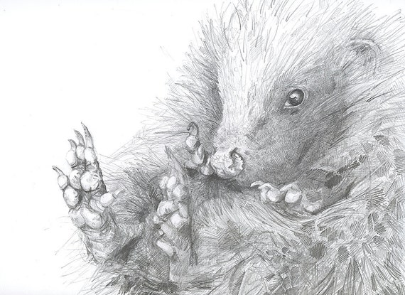 Print - Curled Up Hedgehog