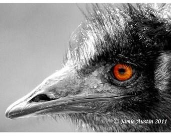 Emu Eye in Black White and Orange 8x10 Fine Art Print