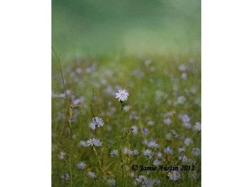 SALE  Blue Wild Flower - Bokeh Earth Toned Pasture 8x10 Fine Art Print