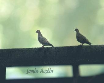 Doves on a Fence 8x10 Fine Art Print