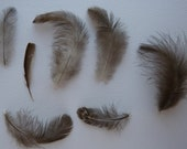 Collection of Natural Chicken Feathers - Smoke Grey