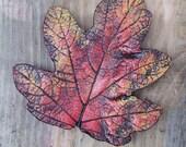 Oak Leaf Hydrangea Pair