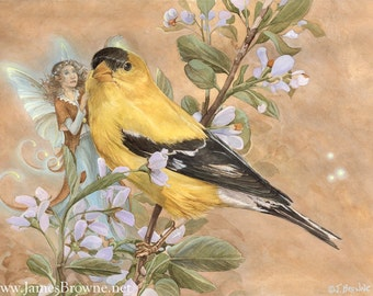 Goldfinch and Fairy 8.5x11 Print