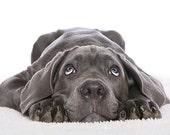 Natural Pet Shampoo ALMOND for Dog Cat Puppy Kitten - Eco Biodegradable tt Love Pets