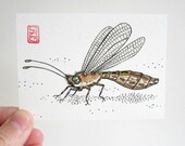 ACEO Owlfly - Insect Art Archival Print - Watercolor Bug Art